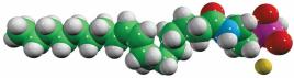anandamide phosphate (OEA-P)